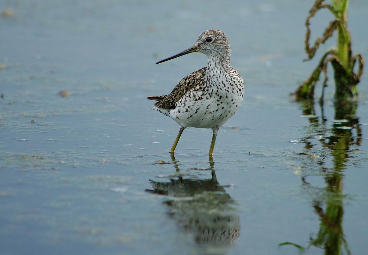 недавно болотная птица кулик картинка соленые отделяют