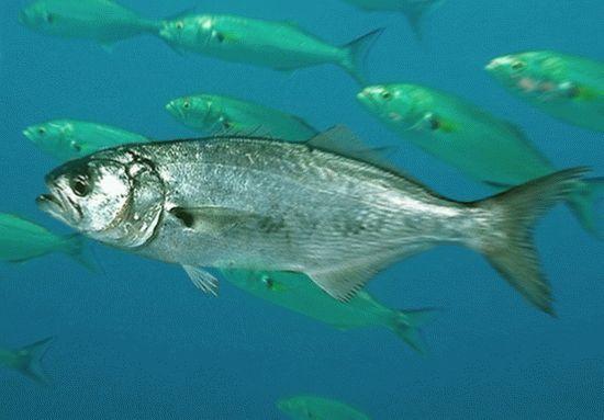 Картинка рыбы что означает задержали преступника