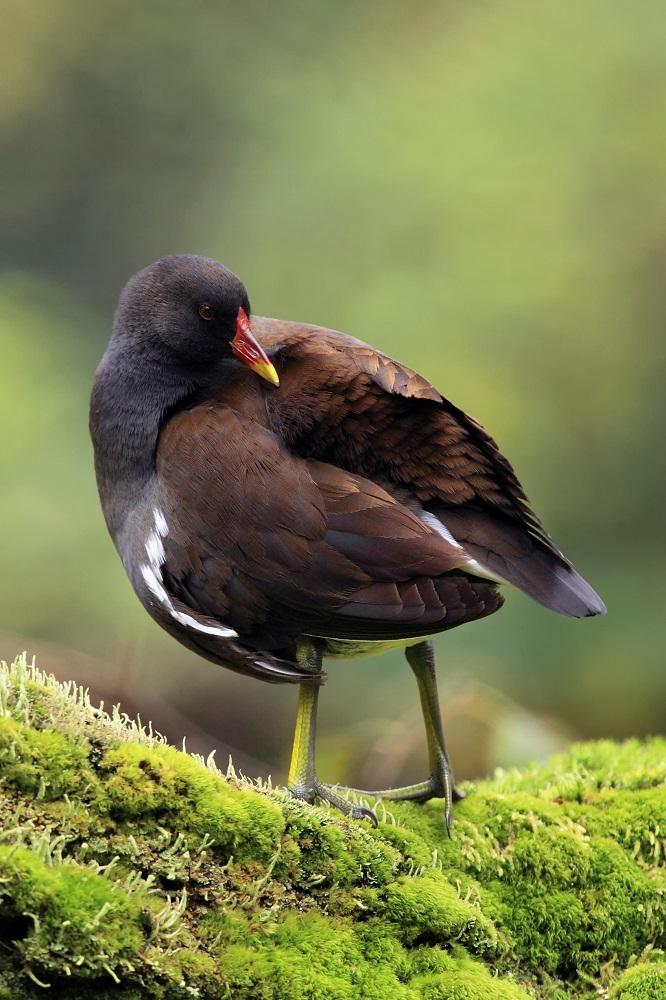 Птицы тайланда фото с названиями обои картинки