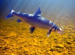 Какая рыба водится в озере?