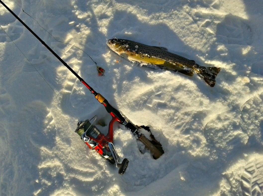 Лучшие места для рыбалки в Ленинградской области